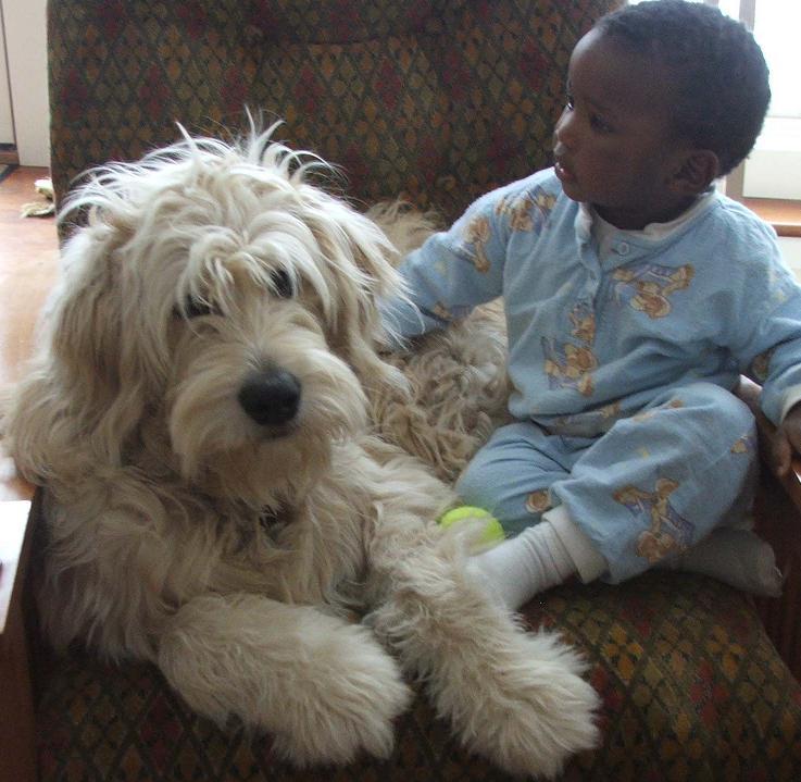 Good References For Dog Adoption
